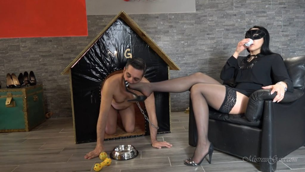 [2019] MISTRESS GAIA - SCAT IN HIS DOGHOUSE (FHD / 642 Mb)